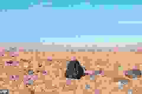 Viên kim cương 4,5 tỉ tuổi đến từ ngoài hành tinh