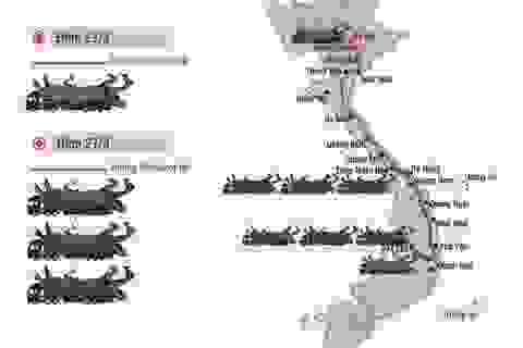 """Infographic: """"Quái thú"""" lọt 16 tỉnh thành và sự """"vô can"""" khó hiểu của CSGT (!)"""
