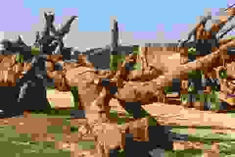 """Đắk Lắk lý giải việc để lọt xe chở cây """"quái thú"""""""