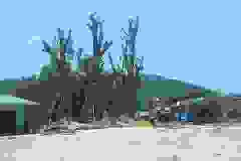 """Yêu cầu chủ cây """"quái thú"""" làm việc với chính quyền để cam kết an toàn"""