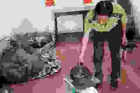 Bàn giao 15 cá thể tê tê quý hiếm cho Vườn quốc gia Cúc Phương