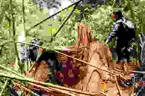 Đình chỉ công tác nhiều cán bộ kiểm lâm vì để mất rừng