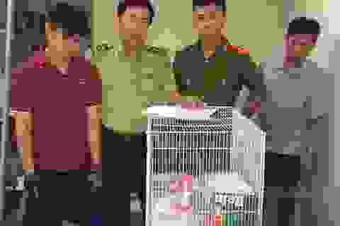Giải cứu 18 cá thể động vật rừng