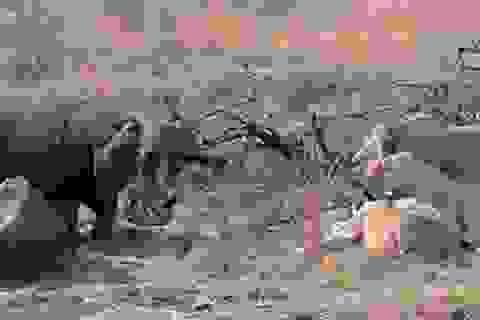 Kỳ lạ khoảnh khắc hà mã liều mạng giành ăn với... đàn sư tử