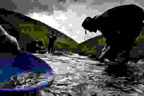 Đổ xô đến con sông cứ đãi là ra vàng quý hiếm nhất thế giới