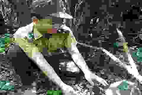 Quảng Bình: 17 cá thể động vật hoang dã được thả về tự nhiên
