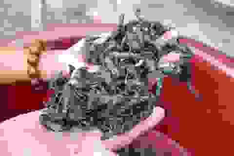 Run rẩy nếm thử món bọ cạp Bảy Núi ngon trứ danh ở An Giang