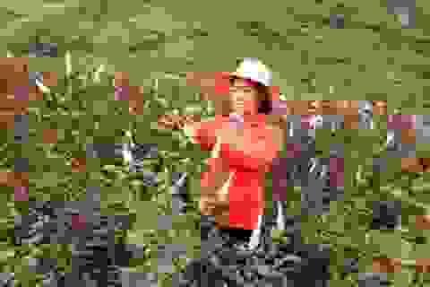 Bỏ việc nhà nước về trồng 6 ha hoa hồng, lãi 40 triệu/tháng