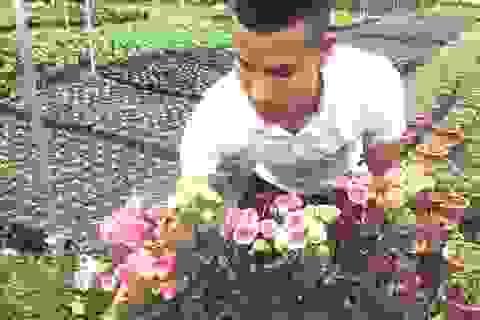 Anh bảo vệ 9X ham trồng hoa hồng, thu 450 triệu đồng/tháng