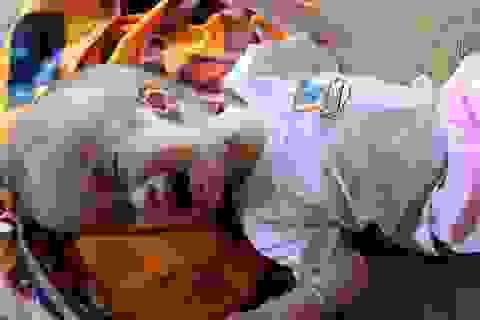 Đầu sắp nổ tung, bé trai bị não úng thủychưa một lần đượcđi bệnh viện