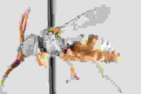 Các nhà nghiên cứu xác định 15 loài ong cúc cu mới