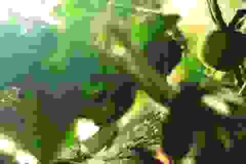 Các hạt nano có thể giúp cứu các cây kém dinh dưỡng