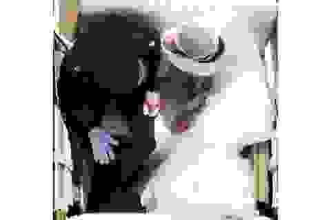 """Bức ảnh ấn tượng nhất tại """"Đám cưới Hoàng gia"""" đã được chụp như thế nào?"""