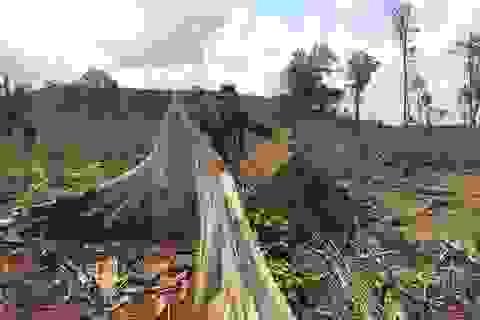Vụ 28 ha rừng cách trạm bảo vệ 15m bị phá: 7 năm công ty lâm nghiệp làm mất gần 300 ha rừng