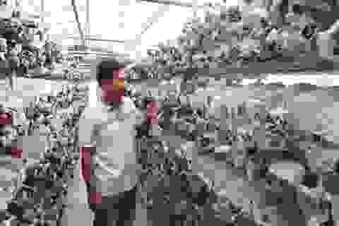 Tạm cất bằng cử nhân, chàng trai xứ Thanh kiếm tiền tỷ từ trồng nấm