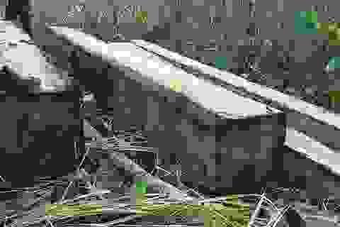 """Vụ lâm tặc khai thác gỗ khủng: """"Hàng tuần họp đều báo cáo rừng không bị xâm hại"""""""