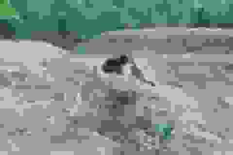 Liều mình selfie với con gấu đang bị thương, người đàn ông tức tưởi thiệt mạng