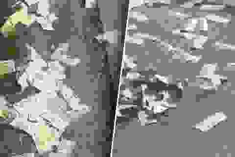 Mỹ: Xe chở 600.000 USD bung cửa, tiền mặt bay tứ tung