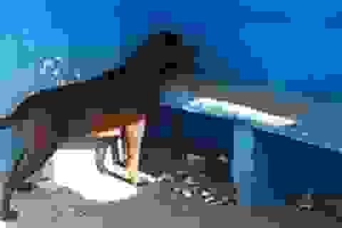 Chú chó thành hiện tượng lạ vì hàng ngày đến nhìn chằm chằm vào một bức tường xanh