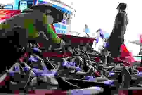 Quảng Ngãi: Ngư dân kiếm hàng chục triệu đồng sau một đêm ra khơi
