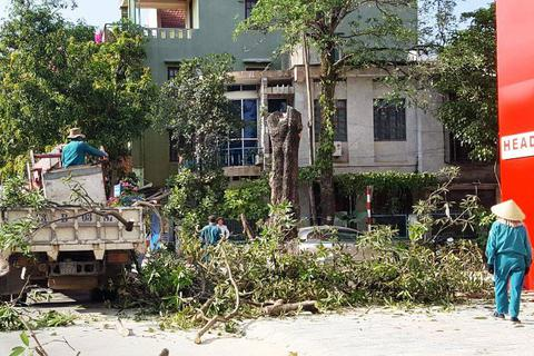Quảng Bình: Cấp phép cho doanh nghiệp chặt hạ cây xanh để lấy mặt tiền buôn bán!