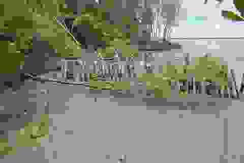"""Chủ tịch tỉnh Cà Mau """"lệnh"""" khẩn cấp xây dựng kè bảo vệ đê biển Tây"""
