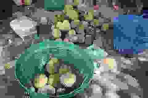 Về thủ phủ sầu riêng tại Lâm Đồng ăn sầu riêng miễn phí