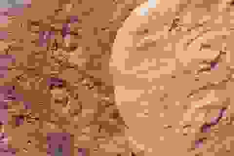 Sinh vật biển cổ đại ở Australia được đặt theo tên cựu Tổng thống Mỹ