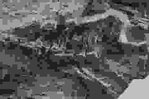 Phát hiện hóa thạch thằn lằn cổ nhất thế giới
