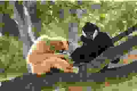 Hơn 800 cá thể động vật hoang dã được thả về tự nhiên
