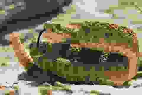 Bị chặt đứt đầu, rắn kịch độc vẫn cắn người