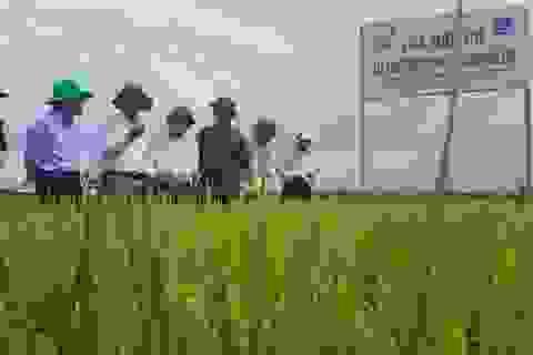 Quảng Trị: Tái cơ cấu nông nghiệp, nhân rộng nhiều cây trồng giá trị kinh tế cao