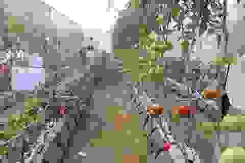 Lâm Đồng hợp tác với Hà Lan phát triển nông nghiệp bền vững