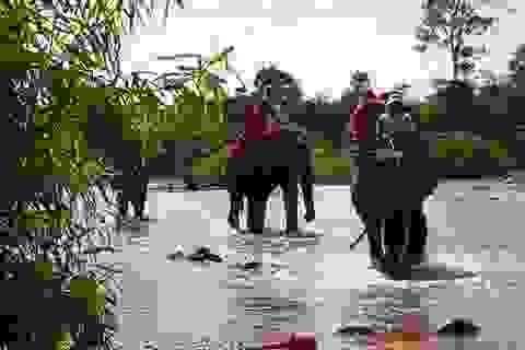 Cam kết không cho du khách cưỡi voi, chỉ cho ngắm