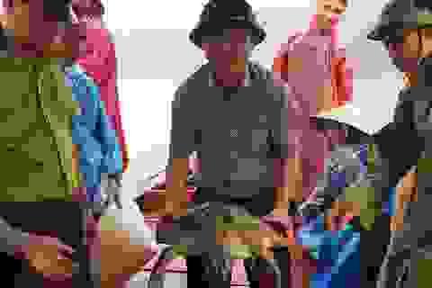Thả rùa quý 22kg về biển