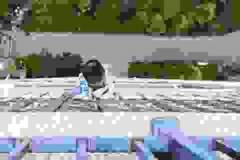 Bé trai 5 tuổi sống sót kỳ diệu sau khi rơi từ tầng 20