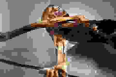 Đã xác định được bữa ăn cuối cùng của thợ săn Alpine 5.300 năm tuổi