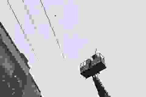 Giải cứu chim quý bị mắc kẹt trên đường dây điện