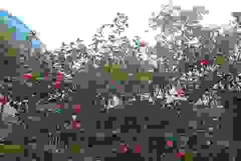 Xuân Quan: Rực rỡ làng hoa gắn với du lịch sinh thái