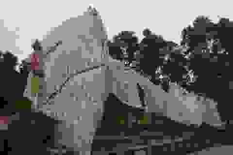 """Cây """"khủng"""" bị tạm giữ ở Quảng Ngãi thực tế vẫn đang sống ở... Phú Yên?"""