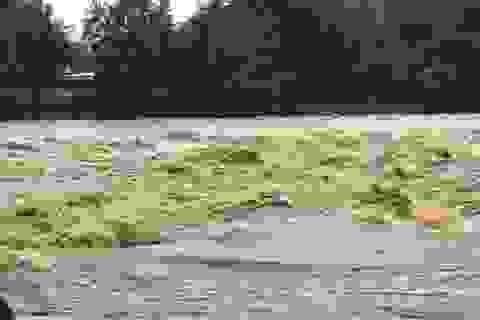 35 người đi hái măng bị nước lũ cô lập trên rừng