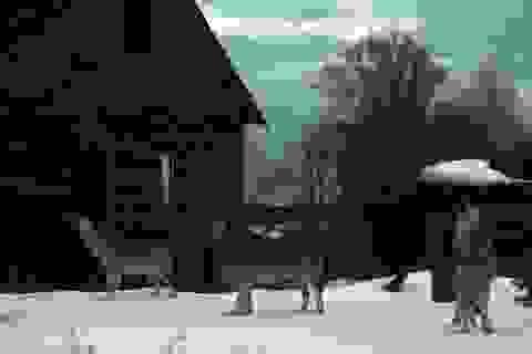 Vùng nhiễm phóng xạ Chéc-nô-bưn bảo tồn cho loài sói xám sinh sôi nảy nở