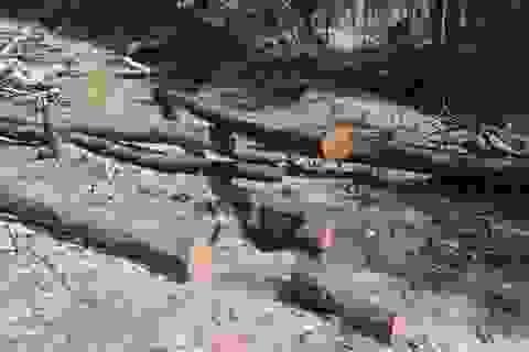 7 năm, một công ty lâm nghiệp làm mất hơn 4.000 ha rừng