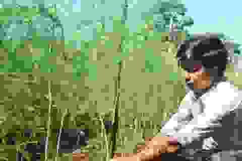 """Thợ điện lạnh trồng """"rau vua"""", mỗi ngày đút túi 300.000-500.000 đồng"""