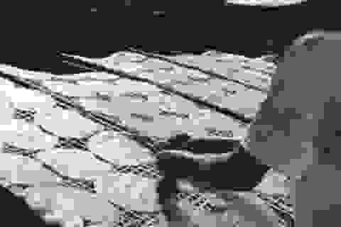 Thu lãi gần 1 triệu đồng/ngày, bánh đa Đô Lương rộng đường xuất ngoại
