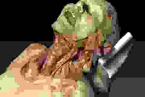 Xác chết ảo có thể được dùng để  giảng dạy về giải phẫu