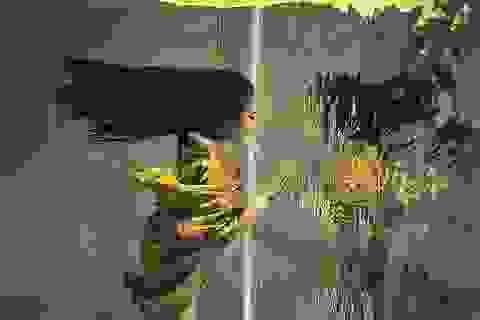 Thổi bay tâm trí với những bức ảnh chiến thắng trong cuộc thi ảnh dưới nước