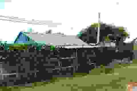 Quảng Bình: Được giao đất trồng lúa, Phó chủ tịch xã xây chuồng trại chăn nuôi vịt