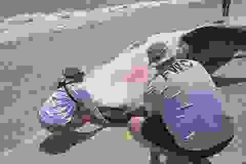 Đợt thủy triều đỏ kinh khủng đang diễn ra Florida