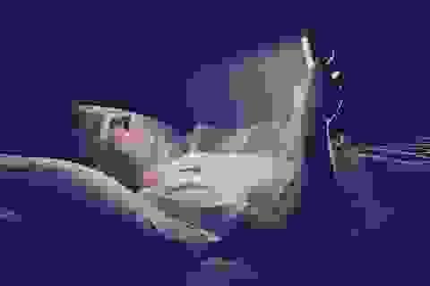 Ánh sáng xanh từ điện thoại di động có gây mù mắt không?